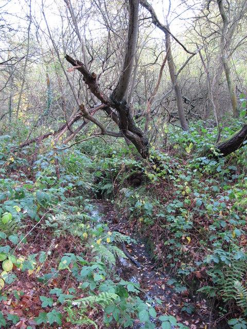 The Kyd Brook - Main Branch, on Crofton Heath (3)