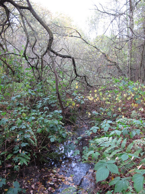 The Kyd Brook - Main Branch, on Crofton Heath (4)
