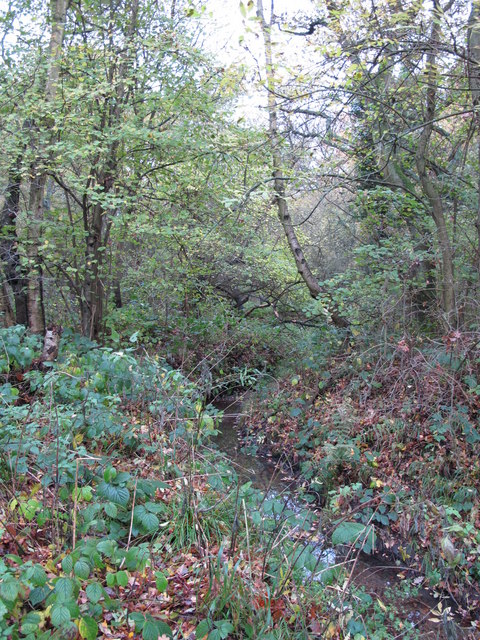 The Kyd Brook - Main Branch, on Crofton Heath (5)