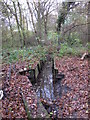 TQ4366 : The Kyd Brook - Main Branch, in Clay Wood (2) by Mike Quinn