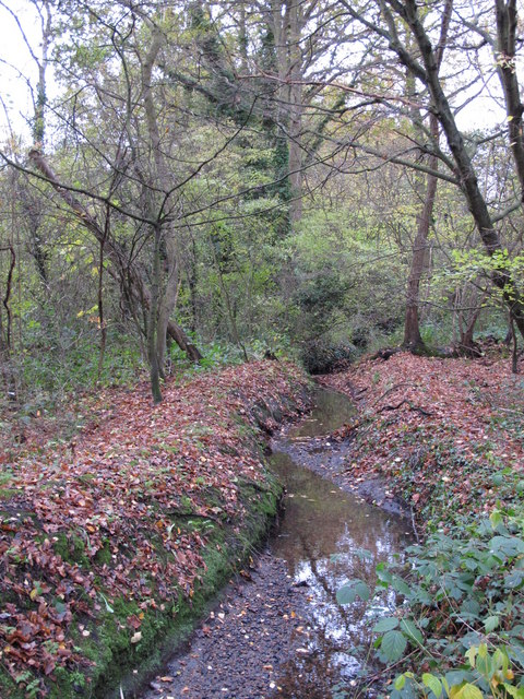 The Kyd Brook - Main Branch, in Clay Wood (4)