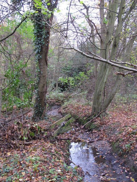 The Kyd Brook - Main Branch, in Clay Wood (5)
