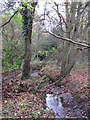 TQ4366 : The Kyd Brook - Main Branch, in Clay Wood (5) by Mike Quinn