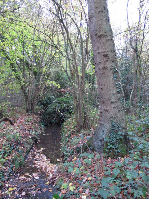 The Kyd Brook - Main Branch, in Clay Wood (6)