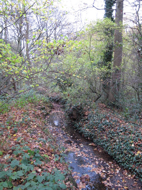 The Kyd Brook - Main Branch, in Clay Wood (7)