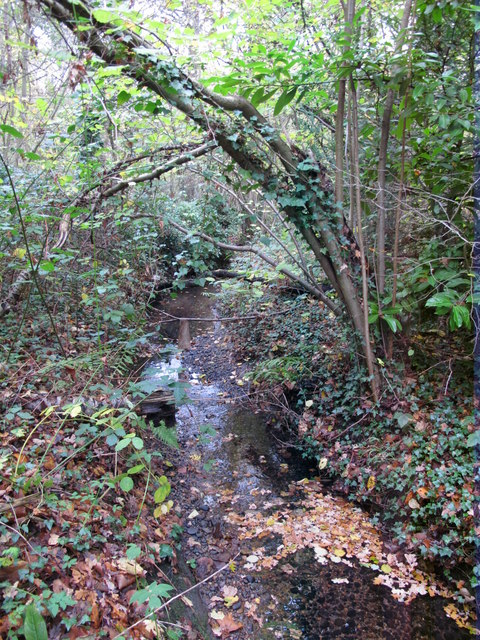 The Kyd Brook - Main Branch, in Clay Wood (2)