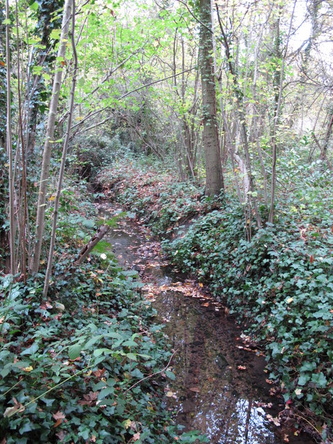 The Kyd Brook - Main Branch, in Clay Wood (3)