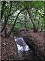 TQ4366 : The Kyd Brook - Main Branch, in Clay Wood (8) by Mike Quinn