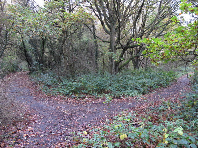 Footpaths in Clay Wood