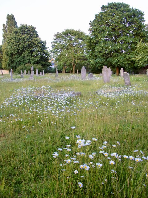 Pushing up daisies: Margravine Cemetery