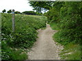 TQ2913 : Crosstracks north of Pyecombe church by Shazz