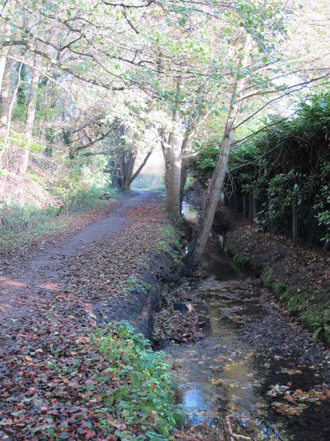 The Kyd Brook - East Branch, west of Monks Way, BR5 (3)