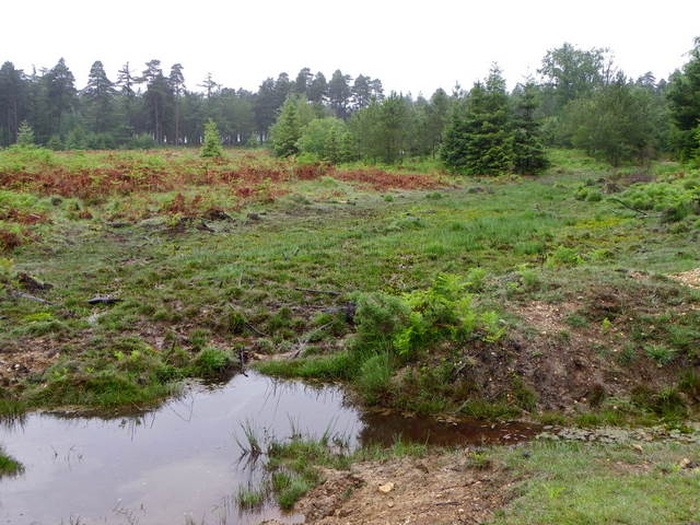 Bracken, Milkham Inclosure
