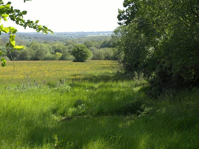 Meadow near Ditchett