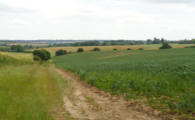 Path along field boundary