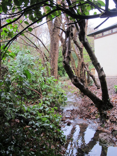 Minor tributary of the Kyd Brook - Main Branch, Ninhams Wood, BR6 (3)