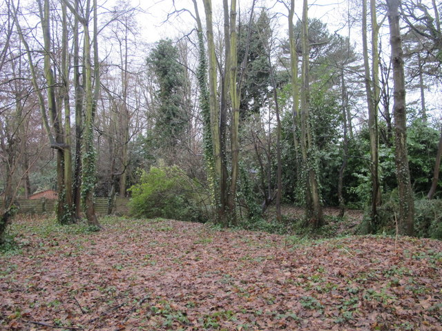 Small patch of woodland south of the A21