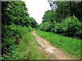 TR1160 : Path through Church Wood by Oast House Archive