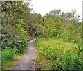 SJ9292 : Footpath to Bredbury Industrial Estate by Gerald England