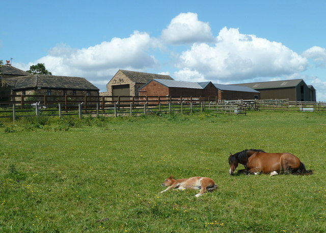 Paddock and farm buildings, Lydgate