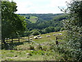 SK3077 : Field with sheep above Horsleygate Hall by Andrew Hill