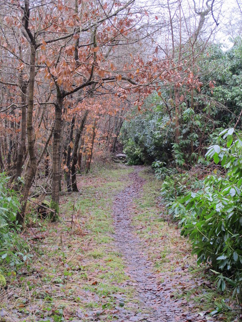 Footpath in Lake Wood
