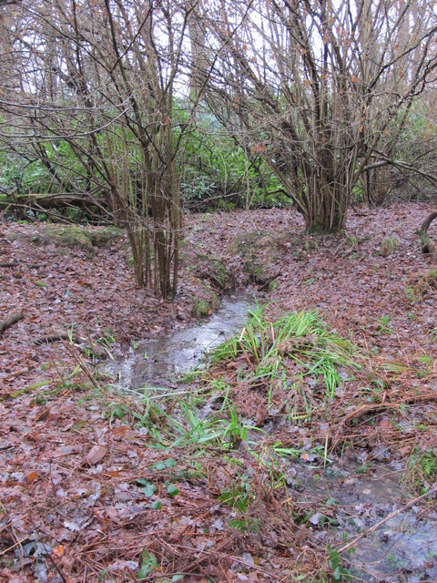 Stream in Lake Wood