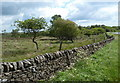 SK2876 : Wall, moorland and upland trees by the A621 by Andrew Hill
