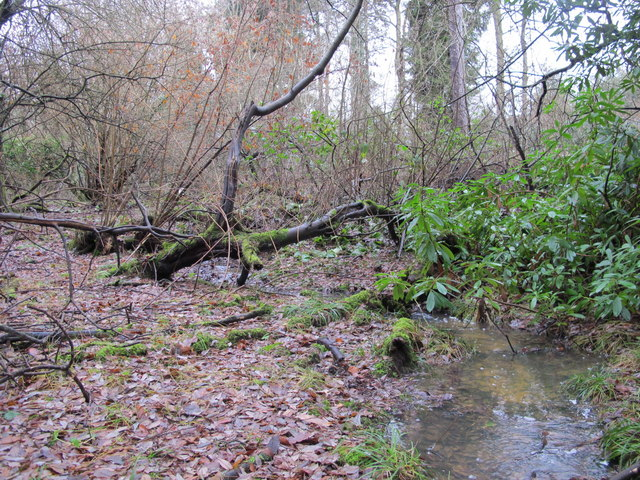 Stream in Lake Wood (5)