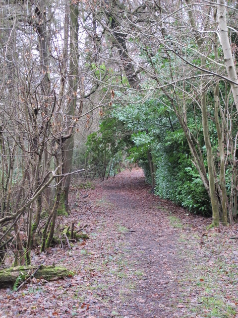 Footpath in Lake Wood (2)