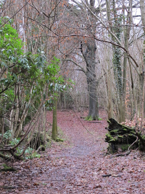 Footpath in Lake Wood (4)
