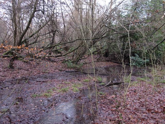 Stream in Lake Wood (3)