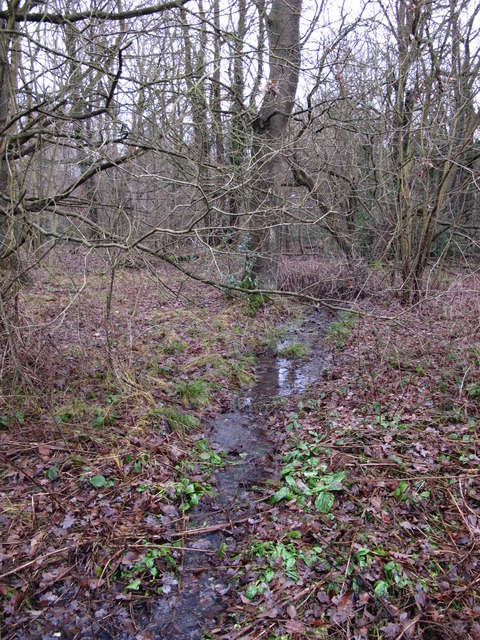 Stream in Lake Wood (6)