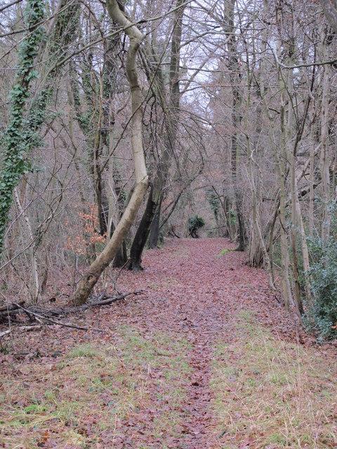 Footpath in Lake Wood