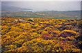 SH1527 : Lowland heath at Mynydd Anelog by Trevor Rickard
