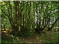 TQ5509 : Woodbank, Mill Wood by Simon Carey