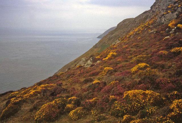 Coast at Braich y Noddfa