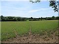 TQ5507 : Staper Field by Simon Carey