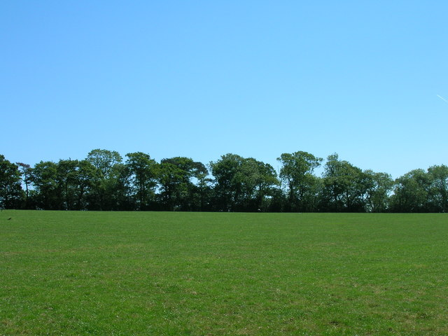 Woodland off Habton Road