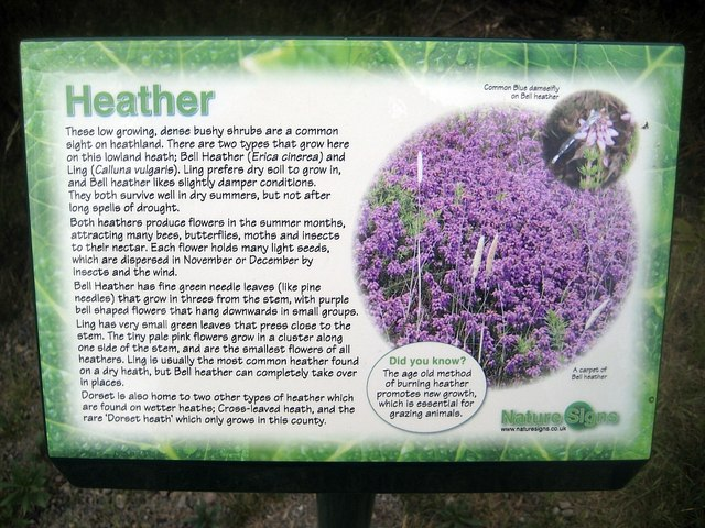 Lofthouse Colliery Nature Park - Heather info