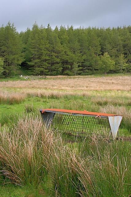 Rough Pasture near Cockley Moor