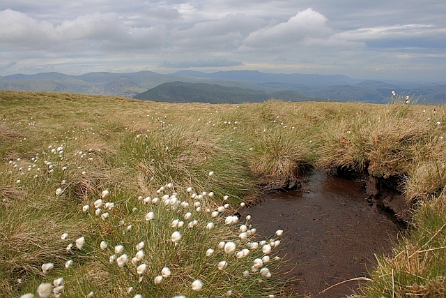 Cottongrass and Peat Grough