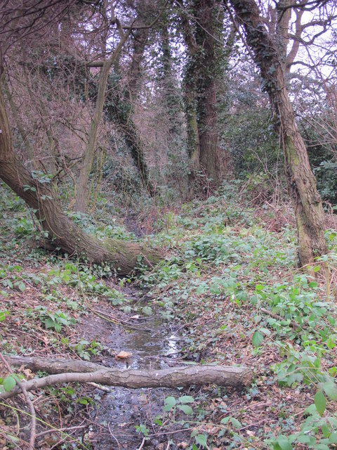 Minor tributary of the Kyd Brook, Darrick Wood (3)