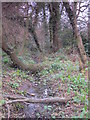 TQ4465 : Minor tributary of the Kyd Brook, Darrick Wood (3) by Mike Quinn
