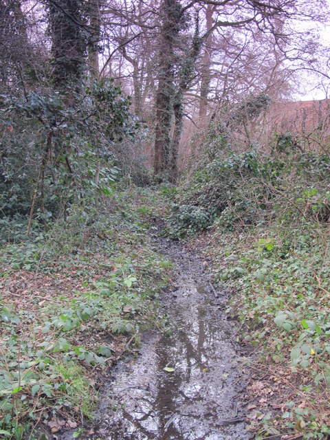 Minor tributary of the Kyd Brook, Darrick Wood (5)
