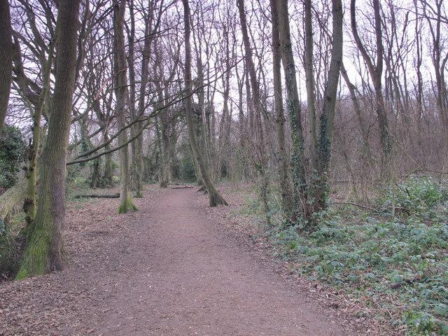 Footpath in Darrrick Wood
