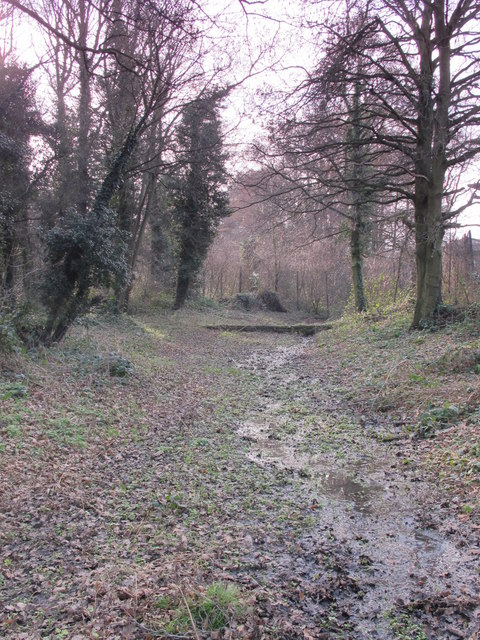 Minor tributary of the Kyd Brook, Darrick Wood (7)