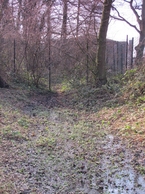 Minor tributary of the Kyd Brook, Darrick Wood (9)