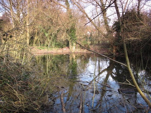 Pond in Darrrick Wood (2)