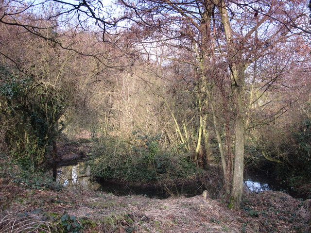 Pond in Darrrick Wood (4)